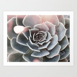 Shiny Succulent Art Print