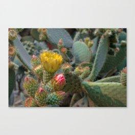 Desert Heat 2 Canvas Print