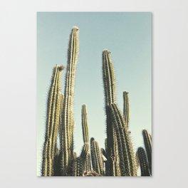 Desert Cactus Leinwanddruck