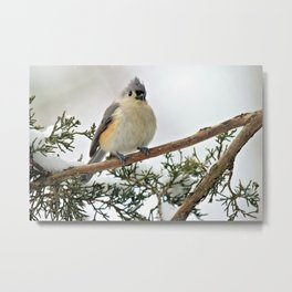 I Am Titmouse. Hear Me Roar! Metal Print