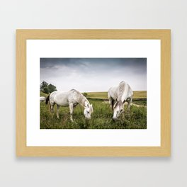 Horses grazing in a country of northern Europe Framed Art Print