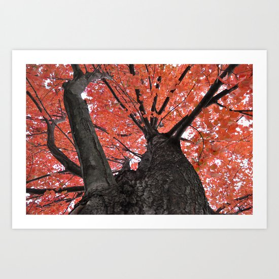 Autumn Oak Art Print