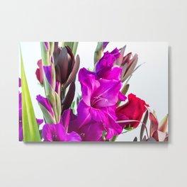 Tropical Gladiolus Metal Print