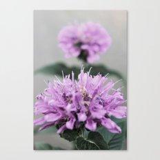 Porcupine Purple Canvas Print