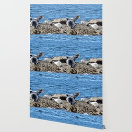 Seal Flips out on crowded rock Wallpaper