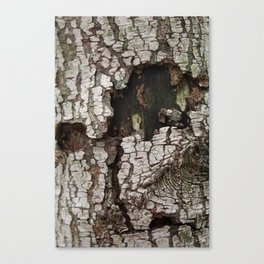 wounds of tree Canvas Print