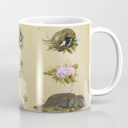 Platypus Embryonic Life Cycle Coffee Mug