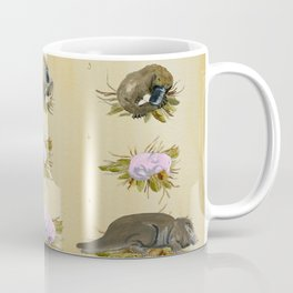Platypus Embryonic Life Cycle Coffee Mug