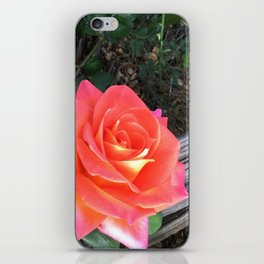 Rose On a fence iPhone Skin