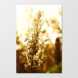 Summer Days Canvas Print