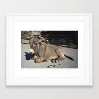 donkey Framed Art Prints featuring Donkey  by Rob Hawkins Photography