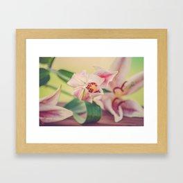 Pink Lily Framed Art Print