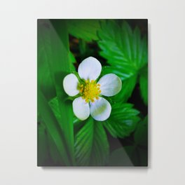 Wild Strawberry Blossom Metal Print