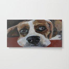Dog, beagle, animal Metal Print