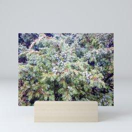 Mountains Plants with Dew Mini Art Print