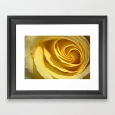 Creme de Rose  1213 Framed Art Print