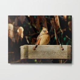 Sweet cardinal Metal Print
