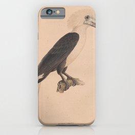 003 White crowned Hornbill buceros comatus4 iPhone Case