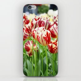 Striped tulips iPhone Skin