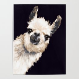 Sneaky Llama in Black Poster