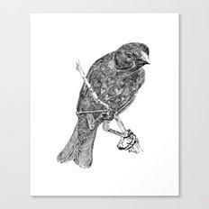 Lovely Bird Canvas Print