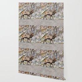 Wapiti Bugling (Bull Elk) Wallpaper