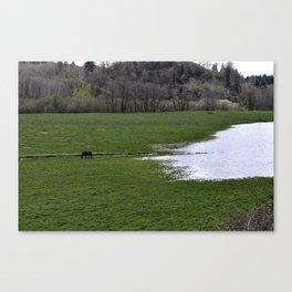 Horse Drink Canvas Print