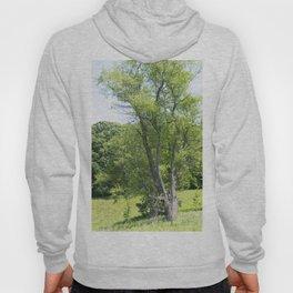 Longwood Gardens - Spring Series 242 Hoody