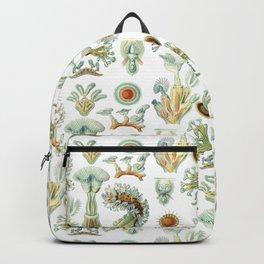 Ernst Haeckel - Scientific Illustration - Bryozoa Backpack