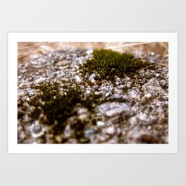 Green Patches Art Print