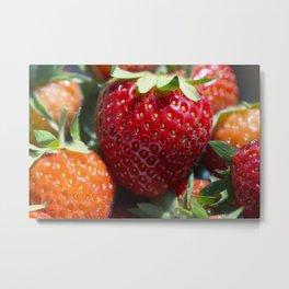 Fresh Ripe Strawberries in the Sun Metal Print