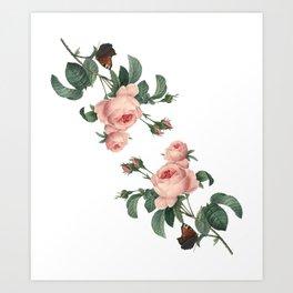 Butterflies in the Rose Garden on White Art Print