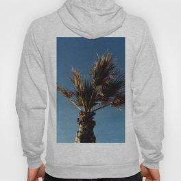 Palmetto in Lacanau-palms,drupe,sabal,swamp,cabbage,abanico,drupa,palmera Hoody