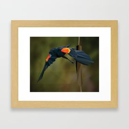 Polygon Redwing Blackbird Framed Art Print