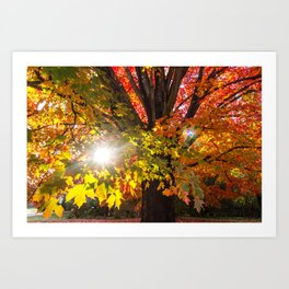 Fall Foliage - Chester, Virginia Art Print