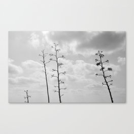 black trees Canvas Print