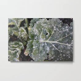 The First Frost Metal Print