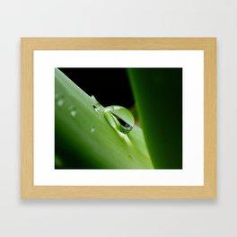 Dew Drop on Aloe Framed Art Print