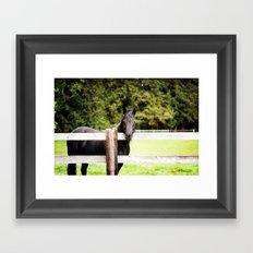 Black Beauty Framed Art Print
