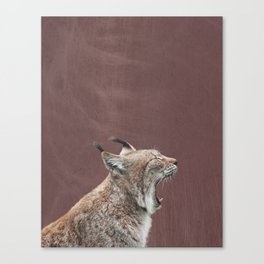 Lynx Yawning, Sable Brown Distressed Background Canvas Print