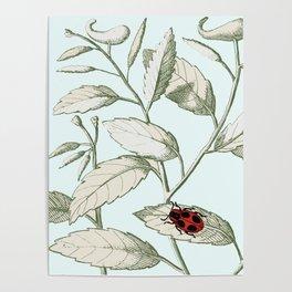 Noli me tangere- ladybird on leaf Poster