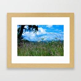 Grasses and Summer Sky Framed Art Print