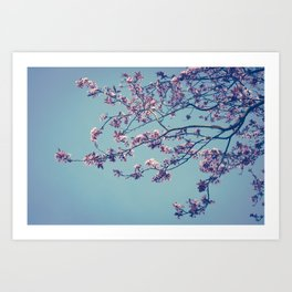 Cherry blossom... Art Print