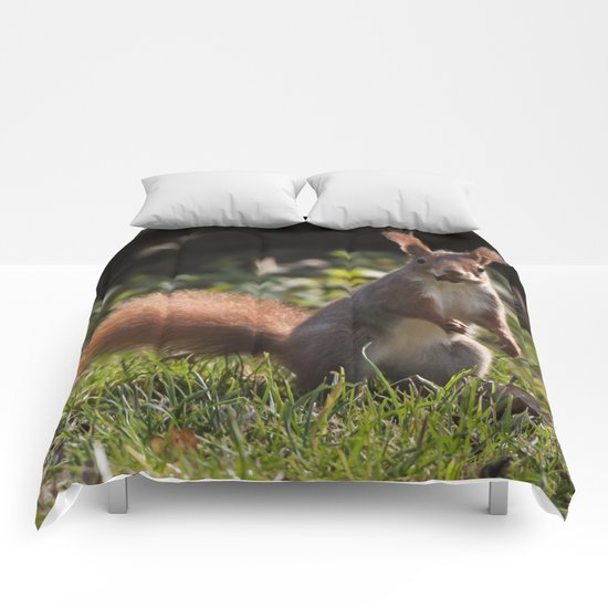 Do you have a nut? Comforters
