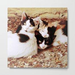 Three Kitties Metal Print