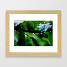 Droplets on a Tree Branch Framed Art Print