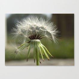 Make a wish... Canvas Print