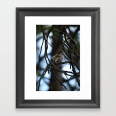 Sweet Sparrow Framed Art Print