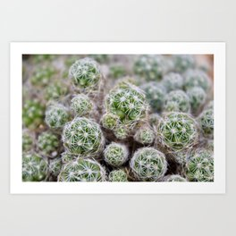 Spiny Bundles Art Print