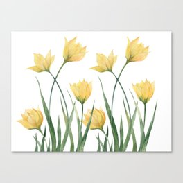 Yellow Woodland Tulips Canvas Print